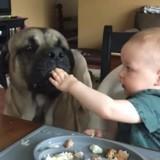 Ce bébé partage son repas avec son énorme chien, et c'est adorable (Vidéo du jour)