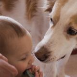 Des bébés et des chiens : 15 duos qui vont vous faire fondre (Photos)