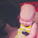 Leur chien se comporte bizarrement devant la nounou, les parents découvrent la terrible vérité