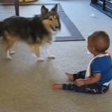 Elle entend son bébé crier, se précipite et n'en revient pas de ce que faisait son chien (Vidéo)