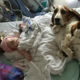 Ils font des adieux à leur bébé mourant, la réaction de leurs chiens a fait pleurer le monde entier (Vidéo)