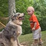 Ils regardent leur chien jouer avec leur fils dans le jardin : tout à coup, il fait un mouvement qui les terrifie (Vidéo)