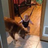Ce chien apprend à un bébé comment sauter (Vidéo du jour)