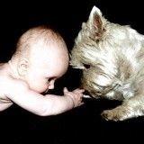 Les bébés parlent le langage des chiens