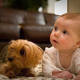 Les chiens sont intelligents... plus que les bébés !