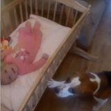 Cet incroyable chien berce un bébé pour l'aider à s'endormir (Vidéo)