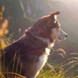 Une Belge reçoit une lettre anonyme au sujet de son chien : elle décide de l'euthanasier