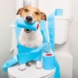 Une émission de Super Nanny canine va voir le jour !