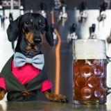 Ce chien est devenu célèbre après avoir bu la bière de ses maîtres