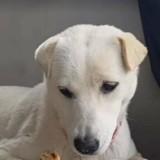 Ce chien partage sa nourriture avec un ami très spécial (Vidéo)