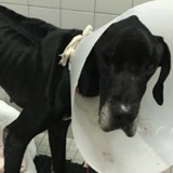 Ce chien mourrait tant de faim qu'il a mangé sa propre patte