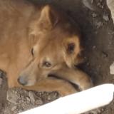 Le périlleux sauvetage d'un chien piégé sur un chantier (Vidéo)