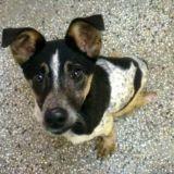 Le chien Bobi doit-il être euthanasié ?