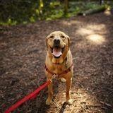 Bois de Vincennes : un nouvel espace pour promener son chien sans laisse !