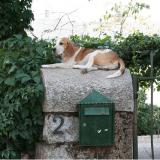 En Autriche, les facteurs travaillent armés... de friandises pour chien !