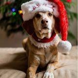 5 idées de cadeaux de Noël pour votre chien