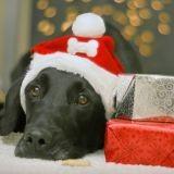 Noël : des idées d'accessoires pour votre chien !