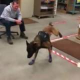 Ce chien policier met des bottes de neige et fait rire tout le monde (Vidéo)