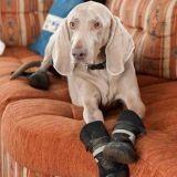 Bluey, l'adorable chien botté !