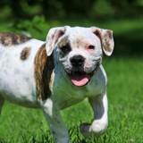 Son chien refuse de manger, le vétérinaire fait une radio et n'en croit pas ses yeux
