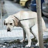 Son chien fait caca devant un restaurant de Marseille, un serveur lui casse la jambe