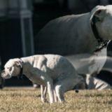 Comment la manière dont nos chiens font leurs besoins prouve qu'ils ont un 6ème sens ?