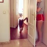 Ces chiens sont les rois du cache-cache (Vidéo du jour)
