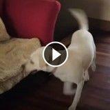 Ce chien est imbattable à cache-cache (Vidéo du jour)