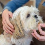 Quels sont les bienfaits des probiotiques pour le chien ?