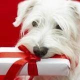 Noël 2018 : 5 idées de cadeaux canons pour gâter votre chien !