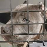 """Refuge pour animaux en état de choc : un chiot prouve """"ce dont les gens sont capables"""""""