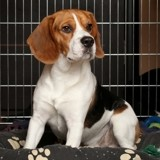 Mettre son chien en cage lors des absences : bonne ou mauvaise idée ?
