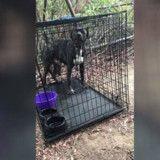 Ils trouvent un chien enfermé dans une cage avec ses gamelles et un mot qui va vous révolter