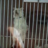 Bluffant ! Des ados tournent un clip choc contre les abandons d'animaux (Vidéo)
