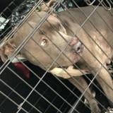 En allant au travail, il voit un chien dans une cage s'approche et a la nausée en réalisant la triste vérité