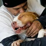 Les apparences sont trompeuses : il abandonne son chien, mais...
