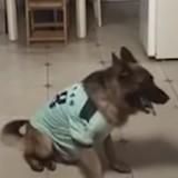Il laisse son chien seul à la maison et quelqu'un sonne : ce que dévoile la caméra est dingue !