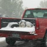 Tempête de neige : elle croise un Pick-Up et écarquille les yeux d'horreur en voyant ce qu'il transporte