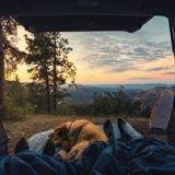 Comment bien voyager en camping-car avec son chien ou chat ?