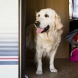 Suite à une dispute, elle décide d'euthanasier elle-même ses 2 chiens de la pire des façons !
