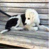 Johnny Hallyday découvre un chienne errante… et l'adopte !