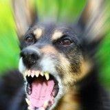 La rage chez le chien : tout savoir sur les symptômes, la prévention et les traitements