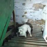 Ils achètent une maison, mais en descendant à la cave ils ont le choc de leur vie (Vidéo)