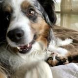 Son chien est déprimé suite à la mort du chat, elle lui fait la plus belle des surprises