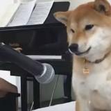 Ce chien adore faire des câlins à son frère et vous allez fondre (Vidéo du jour)