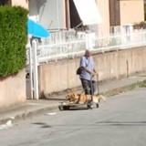 Elle filme un homme qui pousse son chien dans un chariot, le monde entier pleure en découvrant son histoire