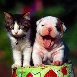 Les chiens plus drôles que les chats ?