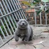 Chien ou chat ? La photo de cet animal devient virale et rend les Internautes fous !