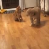11 millions de personnes sont mortes de rire : mais que font donc ce chien et ce chat ?