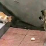 Un chien voit un chat errant dans son jardin : ce qui se passe est unique (vidéo)